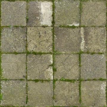 Нарастание мха на тротуарной плитке